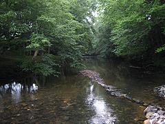 North Carolina Streams